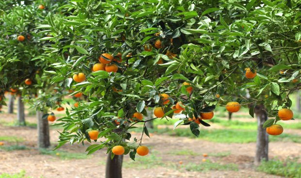Image result for Albania is one of Europe's top citrus and medicinal plant producers